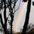 おお、樹間の虹
