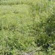 雑草生い茂る