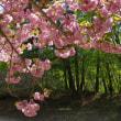 新緑萌ゆる口太山(2018.4.29)その2 花撮り下山