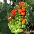秋の果実は食べられるのが好き、食でないのも…