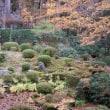 三千院のお庭