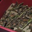 茶豆の種採り