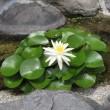 京都竜安寺庭園