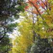木枯らし吹いて秋色深まる