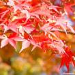 今年の紅葉……、見納めです……!