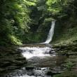 ☆ 滝付近で出会った、野生シカの姿、ドキドキ眺め ☆ (三重県名張市、「A滝」付近)