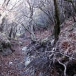 初冬の高隈山