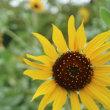 めぐり~取り残された夏の花 と カップ&ソーサーのコレクション(26)   9月25日(火)