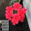 """""""越冬""""する花"""