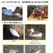 2011年1月16日(日) 野鳥観察とあくあぴあ芥川訪問