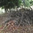 樹林地作業(1011)