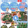 福岡 博多の建築士三兄弟の食育 2018年6月ミニトマトの成長