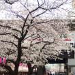 目黒川の桜 いつ、どのぐらい混んでる? 穴場の駅は?