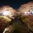 🌸桜🌸 花見 海老川