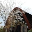 奈良イリスウォータテラス菖蒲池で結婚式の撮影しました