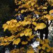 平成庭園の秋