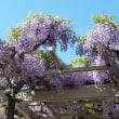 4月・株売買結果  「春日部・藤祭」より