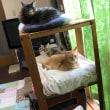 5匹の猫。