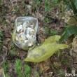 大自然に捨てられたゴミを片付けました ♪