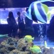 すみだ水族館③サンゴ礁の魚ほか