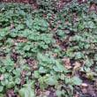 越冬準備完了の植物