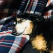 幸せそうに眠るナナ
