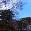 『三色競艶』 地福寺