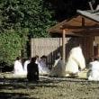 神服織機殿神社・神麻続機殿神社で御衣奉織行事始まる