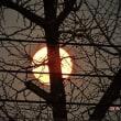 月齢15.1(満月 スーパムーン)