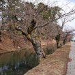 弘前公園の桜の開花予想