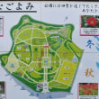 暖かい大寒 吉野公園の水仙 2018/01/21 (鹿児島)