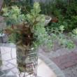 今日も庭仕事(剪定 挿し木 植え替え)