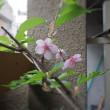 ■2018春・・・