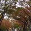 11月中旬の暖かい日‥黄昏時から暗くなるまで中之島公園で