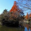 スイセン - 武蔵関公園
