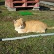 2月24日(日曜日)猫の譲渡会開催します!!!!