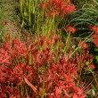 萩・彼岸花・・・秋の花たち