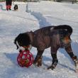 今日は看板犬バル6才の誕生日♪♪