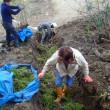 仙台秀明の里山で、段々畑づくり(11月大地の再生&自然菜園コラボ講座)
