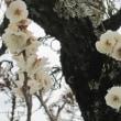鎌倉鶴岡八幡宮散策★カメラカタテにあちこち歩いて健康! ★