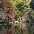 晩秋の新宿御苑 中の池から下の池へ