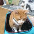 猫がとる想定内の行動