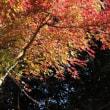 三渓園・紅葉