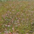 10月の頃の花は、勢いが有ったが、冷え込んで来たので、茎は枯れ葉も刈れていた、
