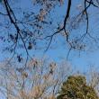 12月30日(土)のつぶやき★平成29年も明日一日ですね!★