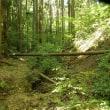 賀茂神社から神籠石まで歩くつもりだったが・・・