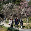 小石川後楽園の梅祭り・・1