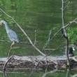 4月の鳥類調査1。(4/26*木)