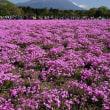 富士芝桜園