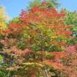 10/9(月)のイキメンニュース~追分&軽井沢周辺の情報